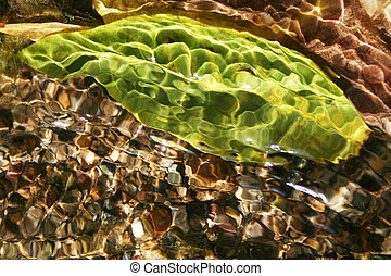 green leaf in the water