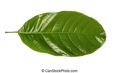 green leaf isolate on white