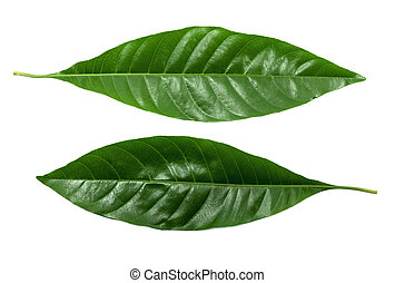 Green leaf isolated on a white background. with clipping path