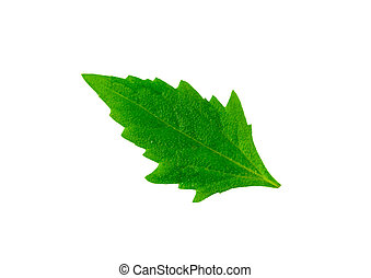 Green leaf isolated on white background. Included clipping path.