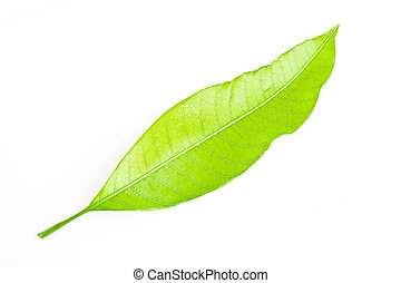 leaf isolated on white background