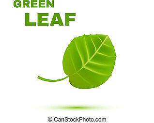 Green Leaf isolated on white background. Vector