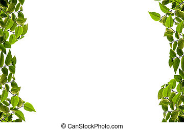 Green leaf isolated on white background, With clipping path