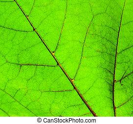 Green leaf macro shot