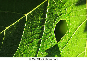 Green leaf macro texture background