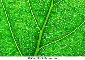 Green leaf - Nice macro photo of big green leaf
