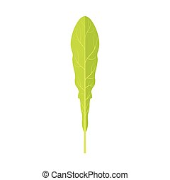 Green leaf of a dandelion vector Illustration