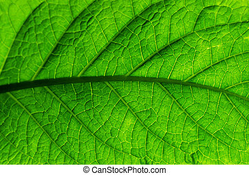 Green leaf of a plant, close-up, background.