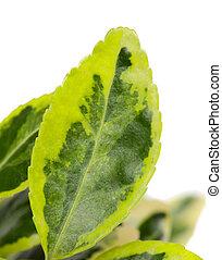 Green leaf of a plant closeup