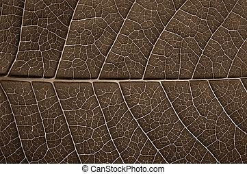 Green leaf of a tree closeup, texture