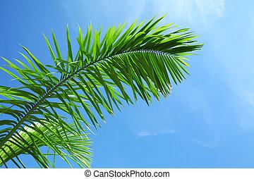 Green leaf of coniferous tree