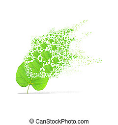 Green leaf of cook on white background