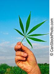 Green leaf of marijuana in a hand against the sky