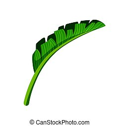 Green leaf of palm tree. Colorful cartoon vector...