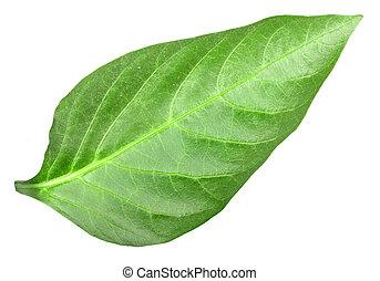 Green leaf of pepper