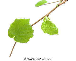 Green leaf of petals over white background.