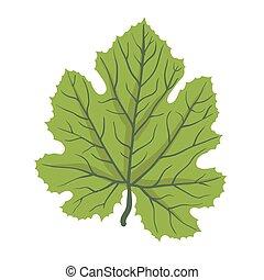 Green leaf of tree, vector illustration
