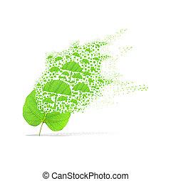 Green leaf of umbrella on white background