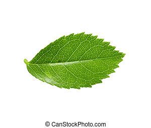 green leaf on a white background. macro