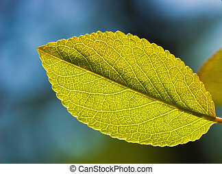 Green leaf on abstract blurred background