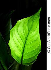 Green leaf on black