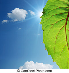 green leaf on blue sky
