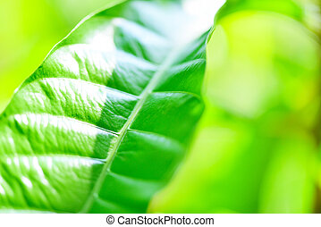 Green leaf on blurred sunlight background in garden ecology fresh leaves tree close up beautiful plant in the nature