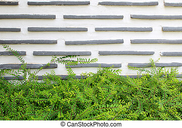 green leaf on cement wall texture background