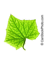 Green leaf on isolated white background