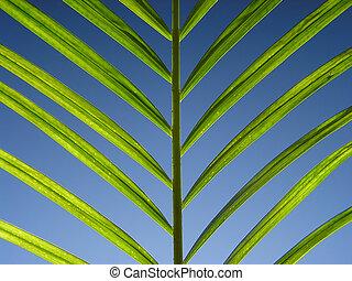 Green leaf on light blue background