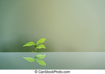 Green leaf on mirror surface