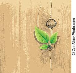 Green Leaf on old wood background