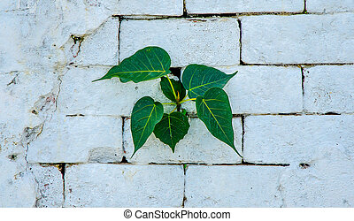 Green leaf on wall background