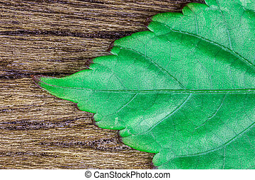 Green leaf on wood background detail texture