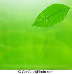 Green leaf over background