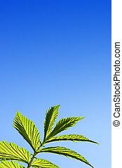 Green leaf over blue sky