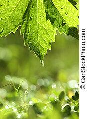 Green leaf over wet grass