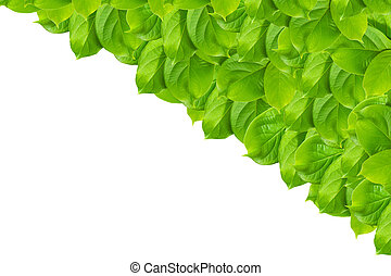 Green leaf pattern isolated