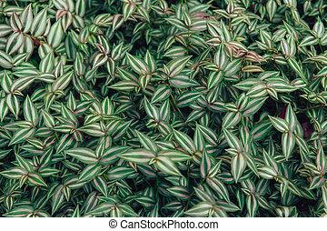 green leaf plant texture vintage colortone.