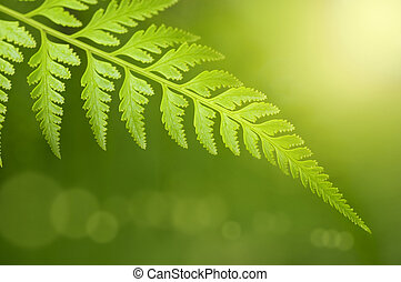 Green Leaf. - Rain forest after the rain in a morning.