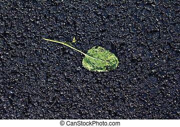 green leaf rolled into the new asphalt