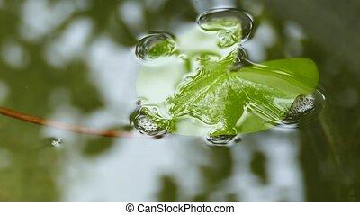 Green Leaf Sitting on a Pond Water