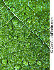 Green leaf - In botany, a leaf is an above-ground plant...