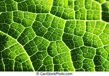Green leaf texture background - Green leaf macro texture...