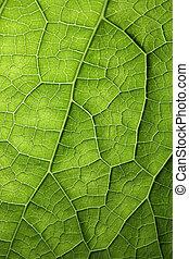Green leaf texture - Green leaf background texture, macro