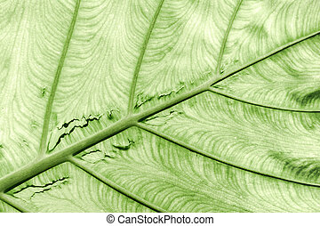 Green leaf texture.