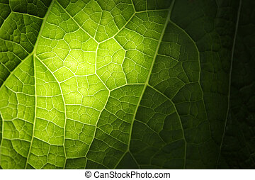 Green leaf texture - Green leaf background texture, macro