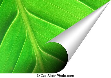 green leaf texture with corner and copyspace for your text...