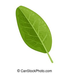 Green leaf. Vector color realistic illustration. Isolated on white