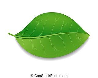 Green leaf. Vector illustration EPS 10